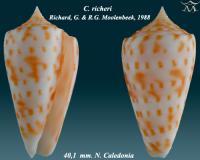 Conus  richeri